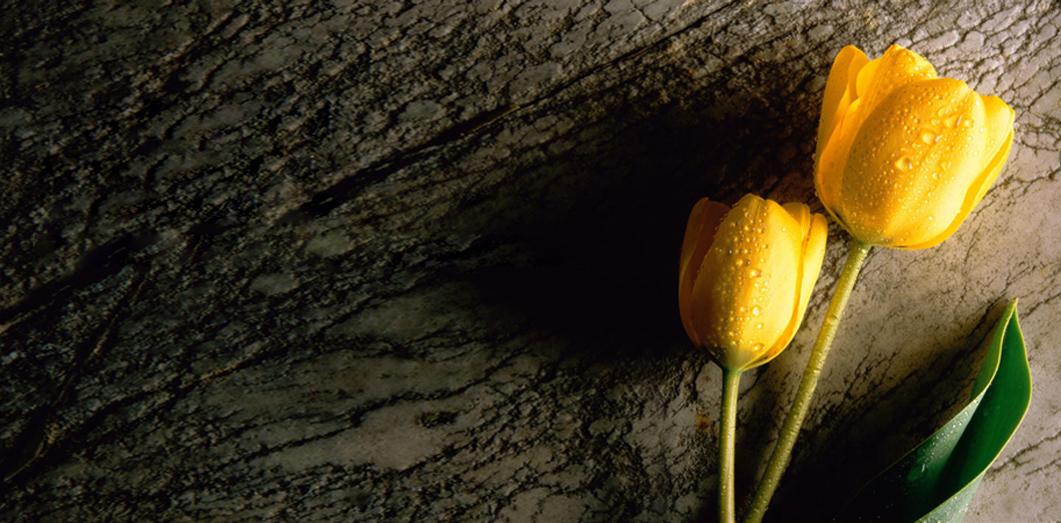 kremacia_slider tulipan